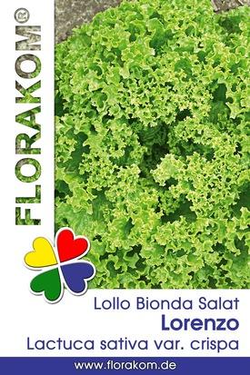 Pflücksalat Lollo Bionda Lorenzo Samen