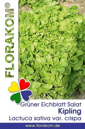 Grüner Kipling Eichblattsalat Samen