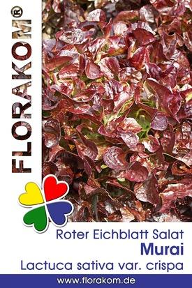 Roter Murai Eichblattsalat Samen