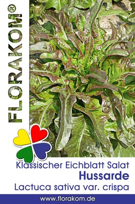 Rotblättriger Klassischer Hussarde Eichblattsalat Samen