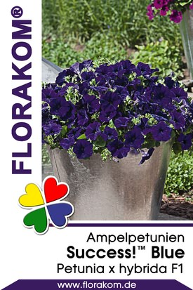 Ampelpetunien SUCCESS!™ Blue