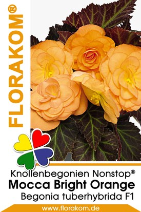 Knollenbegonien Mocca Nonstop® Bright Orange