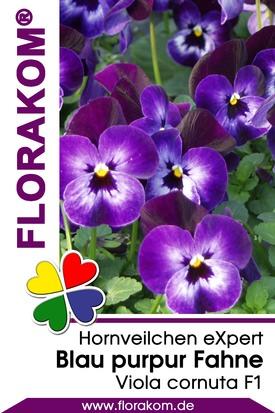 Hornveilchen eXpert Blau mit purpur Fahne