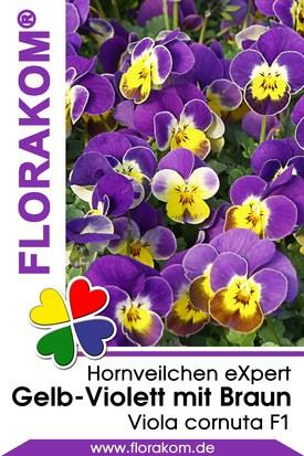 Hornveilchen eXpert Gelb - Violett mit Braun