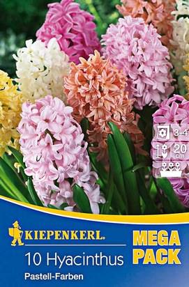 Hyazinthen Pastell Farben Mischung Mega-Pack Zwiebeln