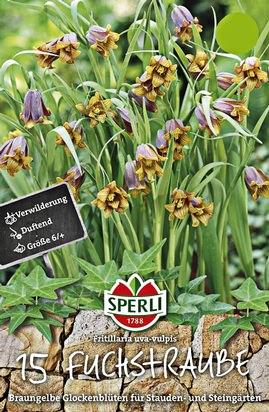 Fuchstrauben - Fritillaria