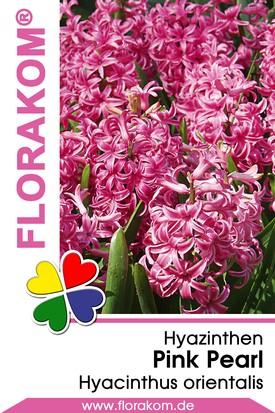 Hyazinthen Pink Pearl