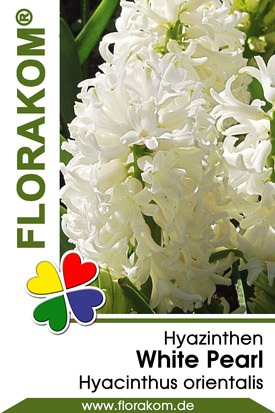 Hyazinthenzwiebeln White Pearl