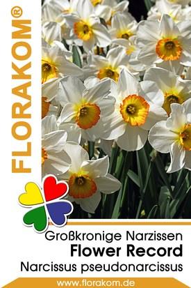 Großkronige Narzissen Flower Record