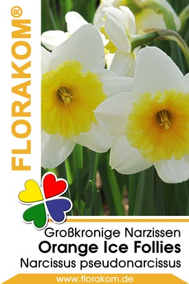 Großkronige Narzissen Orange Ice Follies