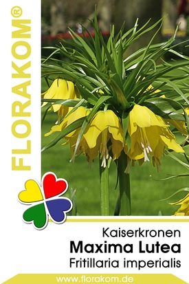 Kaiserkronen Lutea gelb