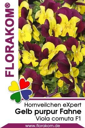 Hornveilchen eXpert Gelb & purpur Fahne