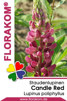 Lupinen Candle Red