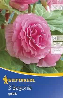 Gefüllte Rosa Begonien (K)