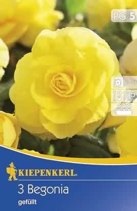 Gefüllte Gelbe Begonien (K)