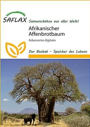 Afrikanischer Affenbrotbaum Samen