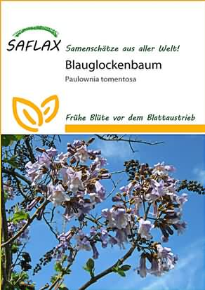 Blauglockenbaum Samen