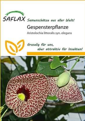 Gespensterpflanze