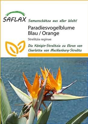 Königinnen Paradiesvogelblume Blau Orange Samen