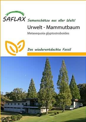 Urwelt Mammutbaum Samen