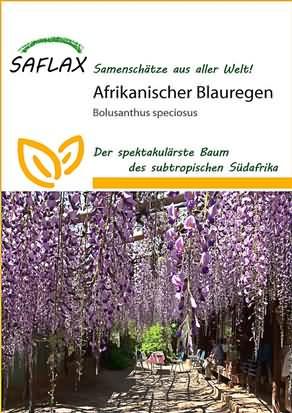 Afrikanischer Blauregen Samen