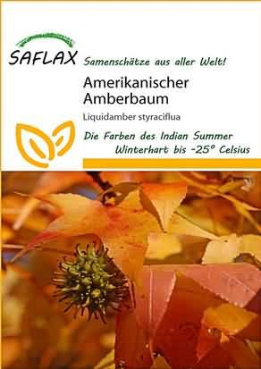 Amerikanischer Amberbaum Samen