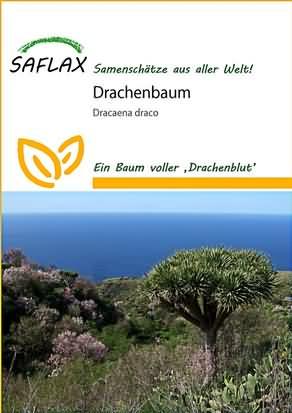Drachenbaum Samen