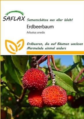 Erdbeerbaum Samen