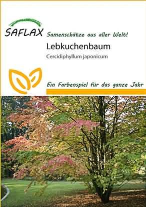 Lebkuchenbaum Samen