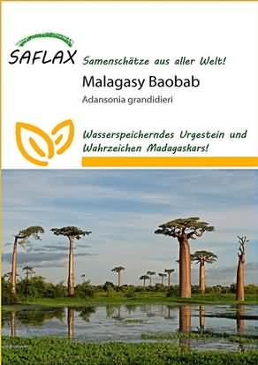 Malagasy Baobab Samen