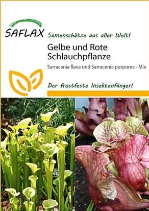 Gelbe und Rote Schlauchpflanze Kannenpflanze Samen