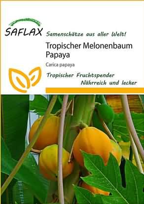 Tropischer Melonenbaum Papaya Samen