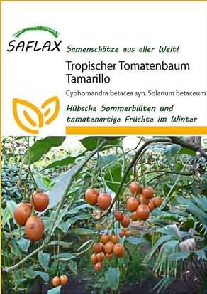Tropischer Tomatenbaum Tamarillo