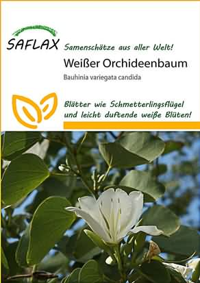 Weißer Orchideenbaum Samen