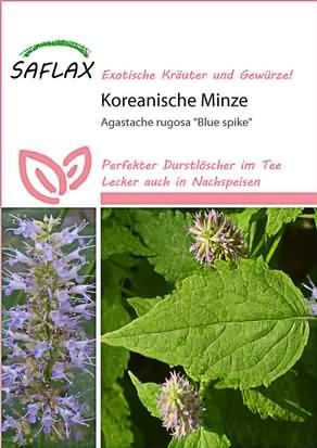 Koreanische Minze Blue Spike Samen