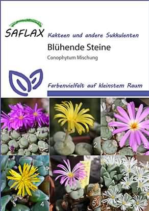 Lebende Steine Conophytum Mischung Samen