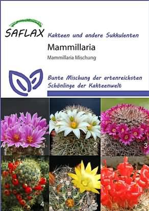 Kakteen Mammilaria Mischung Samen