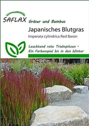 Japanisches Blutgras Red Baron Samen