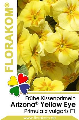 Frühe Kissenprimel Arizona® Yellow with Eye
