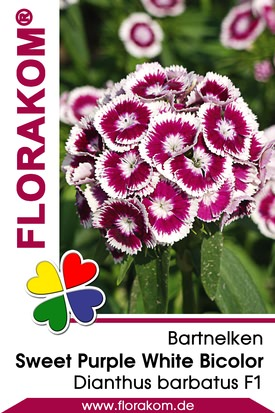 Bartnelken Sweet Pink Magic