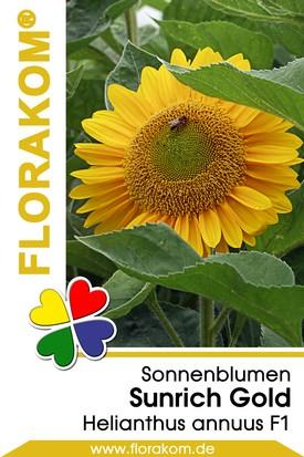 Sonnenblumen Sunrich Gold