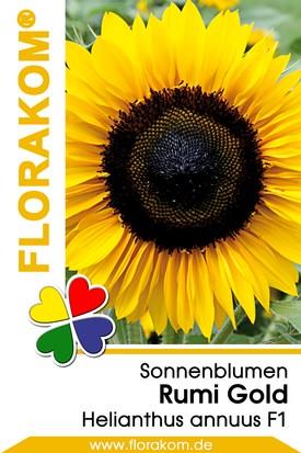 Sonnenblumen Rumi Gold