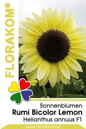 Sonnenblumen Rumi Lemon