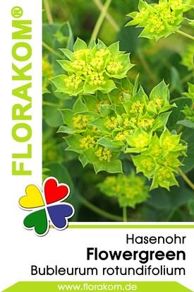 Hasenohr Flowergreen