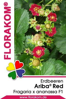 Erdbeeren Ariba® Red Samen
