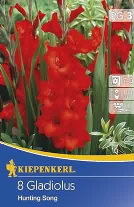 Holländische Großblumige Gladiolen Hunting Song