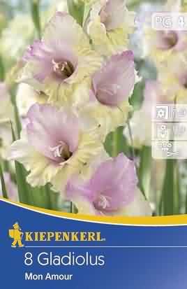 Holländische Großblumige Gladiolen Mon Amour