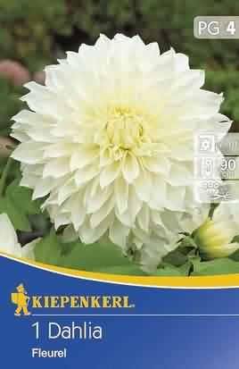Riesenblütige Dekorative Dahlien Fleurel