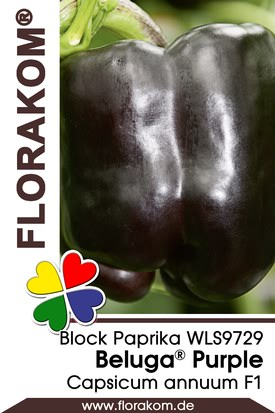 Blockpaprika Beluga® Purple Samen