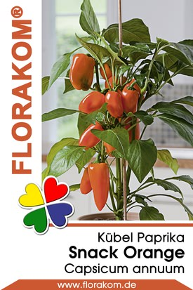 Kübelpaprika Snack Orange